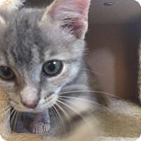 Adopt A Pet :: PIPPI - Burlington, NC