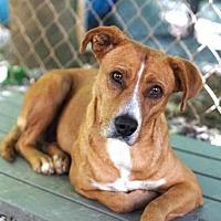 Adopt A Pet :: May - Rocky Mount, VA