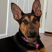 Adopt A Pet :: Gemma - Pleasanton, CA