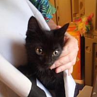 Adopt A Pet :: Ringo Star - Davis, CA