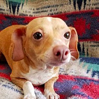 Adopt A Pet :: Notion **FOSTER NEEDED** - New York, NY