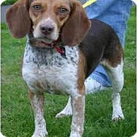 Adopt A Pet :: Lucy - Portland, OR