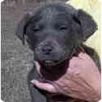 Adopt A Pet :: Sable - Adamsville, TN