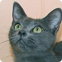 Adopt A Pet :: Nikita - Atlanta, GA