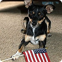 Adopt A Pet :: Gizmo - Glenpool, OK