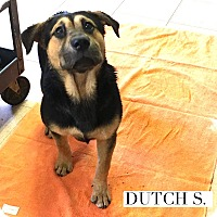 Adopt A Pet :: Dutch S. - Acton, CA