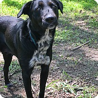 Adopt A Pet :: Maude - Lewisville, IN