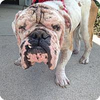 Adopt A Pet :: Lukas - Columbus, OH