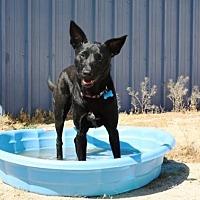 Adopt A Pet :: Cici - Littlerock, CA