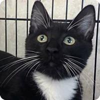 Adopt A Pet :: AA-Ashton - Tyler, TX
