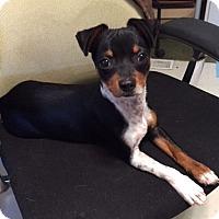Adopt A Pet :: Ziggy - Winters, CA