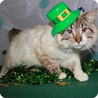 Adopt A Pet :: Mocha - Erwin, TN