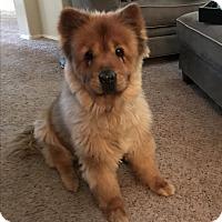 Adopt A Pet :: SUSHI - Phoenix, AZ