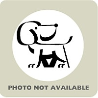 Adopt A Pet :: Timber - Menands, NY