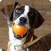 Adopt A Pet :: April - Glastonbury, CT