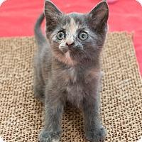 Adopt A Pet :: Nova - Chicago, IL