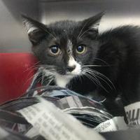 Adopt A Pet :: Lisa - Wantagh, NY