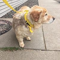 Adopt A Pet :: Tudy - Chippewa Falls, WI
