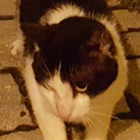 Adopt A Pet :: Toto - brewerton, NY