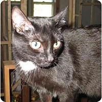 Adopt A Pet :: Dasher - Cincinnati, OH