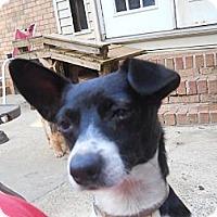 Adopt A Pet :: Lance - Charlotte, NC