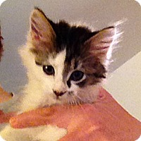 Adopt A Pet :: McCartney - Green Bay, WI