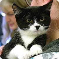 Adopt A Pet :: Edgar - Pittstown, NJ