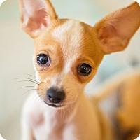 Adopt A Pet :: Junebug Jones - Millersville, MD
