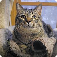 Adopt A Pet :: Duncan - Roseville, MN