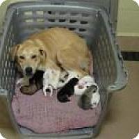 Adopt A Pet :: Peregrin - Alpharetta, GA