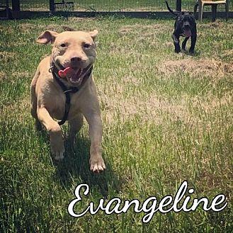 Terrier (Unknown Type, Medium) Mix Dog for adoption in Mobile, Alabama - Evangeline