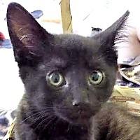 Adopt A Pet :: Winter - Walworth, NY