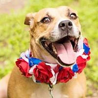 Adopt A Pet :: Karma - Pittsburgh, PA
