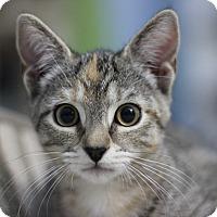 Adopt A Pet :: Blaze - Richmond, VA
