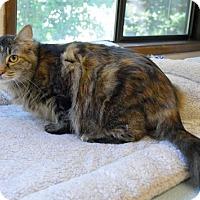 Adopt A Pet :: Tabitha - Portland, OR