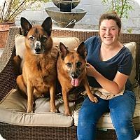 Adopt A Pet :: Sweetie & Sugar - Burbank, CA