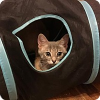 Adopt A Pet :: Adeline - Wilmore, KY