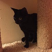 Adopt A Pet :: Daphne - Glendale, AZ