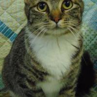 Adopt A Pet :: Pecan Pie - Moses Lake, WA