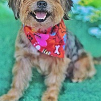 Adopt A Pet :: Koby - Yuba City, CA
