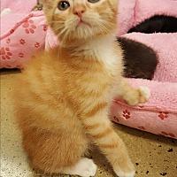 Adopt A Pet :: Ash - Smyrna, GA