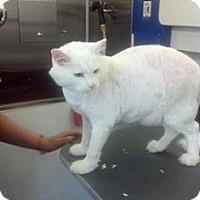Adopt A Pet :: Mr. B - San Fernando Valley, CA