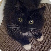 Adopt A Pet :: Baby Wesley - Columbus, OH