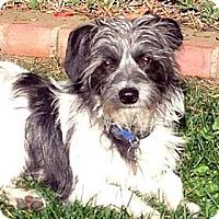 Adopt A Pet :: ALFIE - Salt Lake City, UT