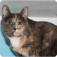 Adopt A Pet :: Emily - Marietta, GA