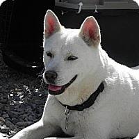 Adopt A Pet :: Jinx - Los Angeles, CA