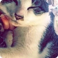 Adopt A Pet :: Linc - Vancouver, BC