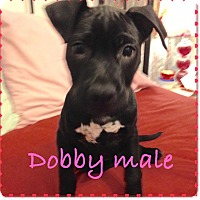 Adopt A Pet :: Dobby - Lewisville, IN