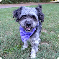 Adopt A Pet :: Apple - Mocksville, NC