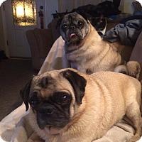 Adopt A Pet :: Chase & Oscar - Huntingdon Valley, PA